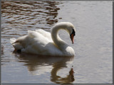 pure elegance............. by fogz, Photography->Birds gallery
