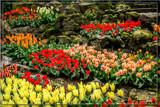 Keukenhof 15 by corngrowth, photography->gardens gallery