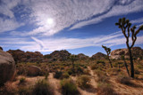 Joshua Tree by ryzst, Photography->Landscape gallery