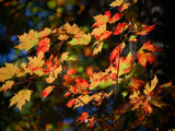 More Autumn Colors by gerryp, Photography->Nature gallery