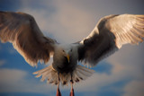 DUCK! by solita17, Photography->Birds gallery