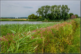 Polder Tranquility by corngrowth, photography->landscape gallery