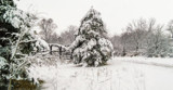Snowstorm by Pistos, photography->landscape gallery