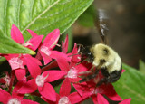 Wings A Buzzing by rahto, Photography->Insects/Spiders gallery