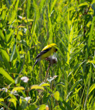 Plucky by Pistos, photography->birds gallery