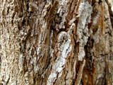 Bark by J_272004, Photography->Textures gallery
