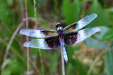 A Dragonfly from Buckingham by jeenie11, photography->insects/spiders gallery