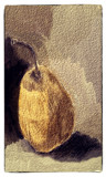 A Pear by bfrank, illustrations gallery