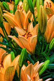 Lilies for Miss Marguerite by nanadoo, photography->flowers gallery