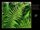 Ferns by LynEve, Photography->Nature gallery