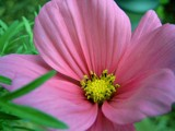 Pink Brilliance by bdayfun, Photography->Flowers gallery
