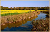 Yellow Is The Color 2 by corngrowth, photography->landscape gallery