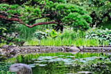 Garden Reflections by Ramad, photography->gardens gallery