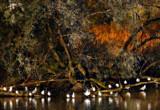 Bird Island by biffobear, photography->birds gallery