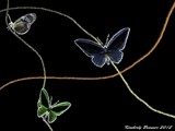 Butterflies 2012 by Neass, computer->landscape gallery