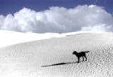 First trip to White Sands by snapshooter87, photography->pets gallery