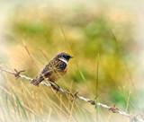 Bird on a wire by biffobear, photography->birds gallery