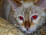 Luna by psychofreak, photography->pets gallery