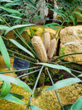 This Fern is a Bit Corny by Pistos, photography->flowers gallery