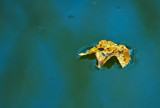 Simply Fall by SatCom, Photography->Nature gallery
