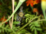 Spider in the Shrub by StarLite, photography->insects/spiders gallery