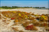 Beach Vegetation by corngrowth, photography->shorelines gallery