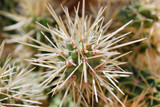 Prickly Patterns by gr8fulted, Photography->Flowers gallery