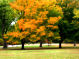 Carondelet in Autumn by jojomercury, Photography->Landscape gallery