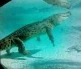 Maximo! by GomekFlorida, photography->reptiles/amphibians gallery