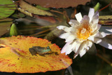 Pond Sun by rahto, Photography->Reptiles/amphibians gallery