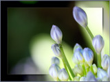 Little buds in the sun by LynEve, Photography->Flowers gallery