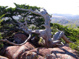 Tree on Mt Scott by cegerp, Photography->Mountains gallery
