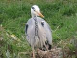 Hello!! by owldgirl, photography->birds gallery