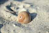Seashell II by sceleris, Photography->Macro gallery