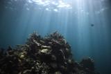 Reef & Sky by r0bbyr0b, Photography->Underwater gallery