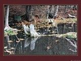 Fall Wetlands by RobNevin, photography->landscape gallery
