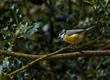 Hawks Gone by biffobear, photography->birds gallery