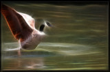 Fractalius Goose by Jimbobedsel, Photography->Manipulation gallery