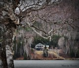 Spring time by picardroe, photography->landscape gallery