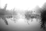 Morning fog by lusikny, Photography->Landscape gallery