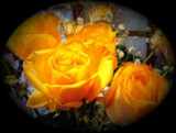 Yellow Rose by dukes_goddess, Photography->Flowers gallery