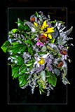 Floral Abstract by corngrowth, photography->manipulation gallery