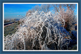 Wintertime 4 (of 4), Hoar Frost by corngrowth, Photography->Landscape gallery