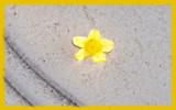 Fallen by ltweir, Photography->Flowers gallery