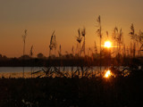 Sunrise Through Bullrushes by gerryp, Photography->Sunset/Rise gallery