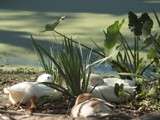 Do Not Disturb by regmar, Photography->Birds gallery