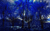 Blue Maples by FlimBB, computer->landscape gallery