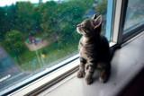 Nermal by amygodin, photography->pets gallery