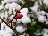 First and last snow in İzmir. by osifa, photography->nature gallery