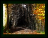 The Road Not Taken by reddawg151, Contests->In Print gallery